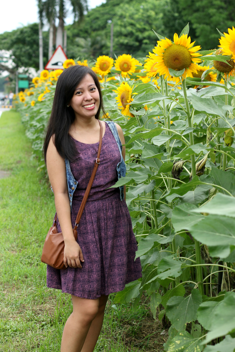 Sunflowers at UP Diliman (11)