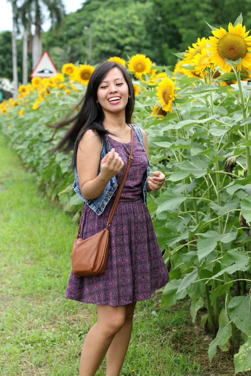 Sunflowers at UP Diliman (12)