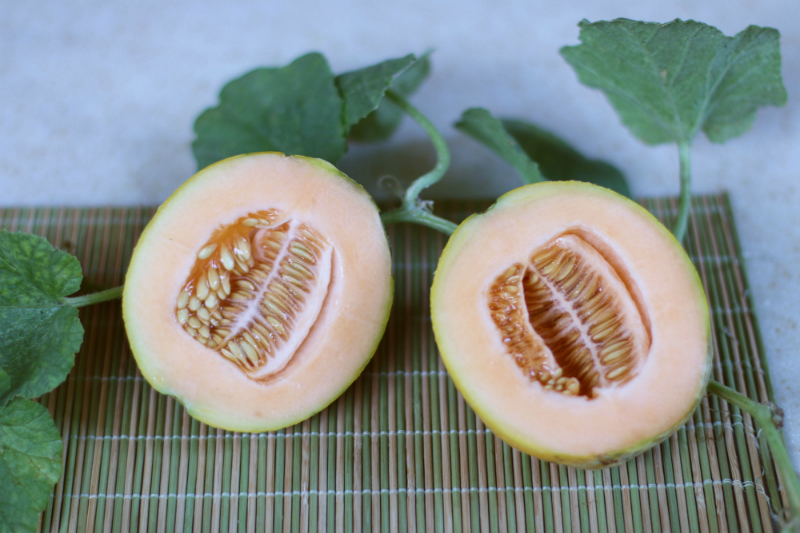 how to grow melons (15) - Copy