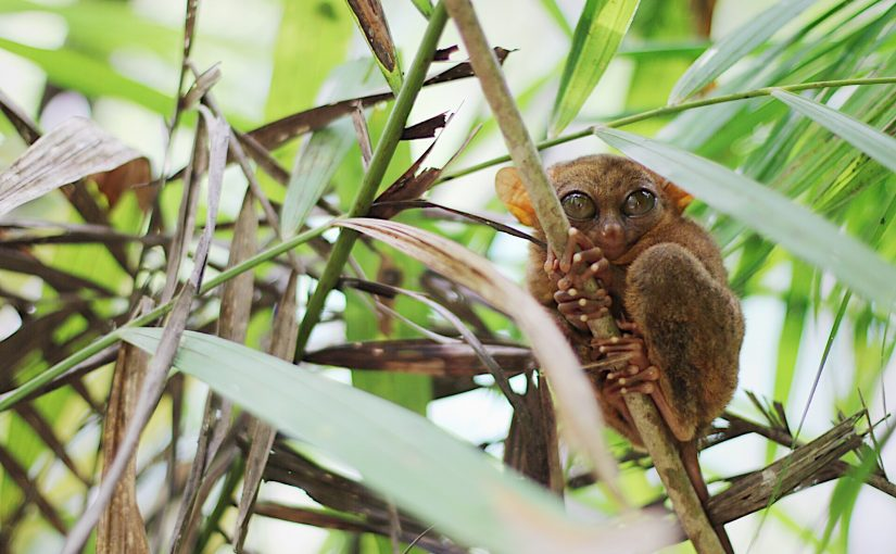 BOHOL TOUR: Bee Farm and Tarsier Sanctuary