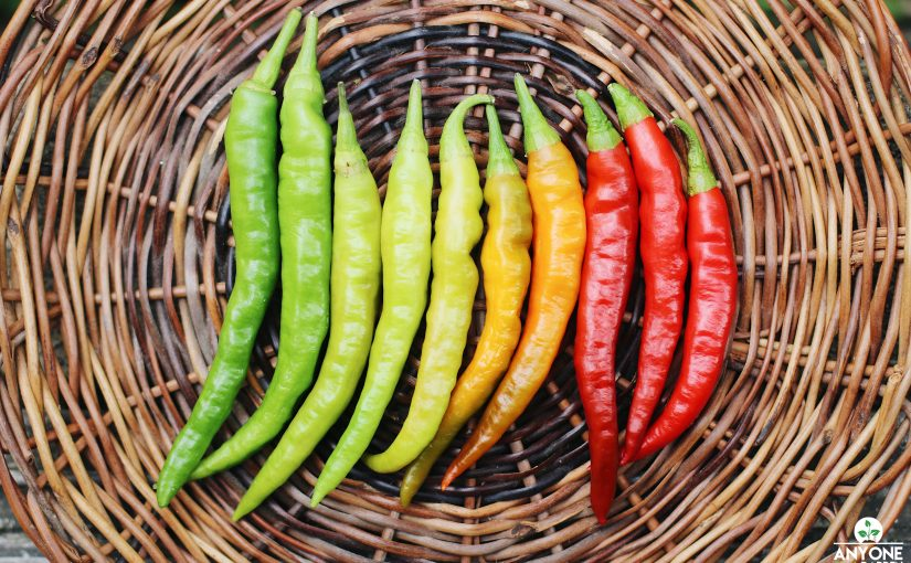 How to Grow Long Chilis